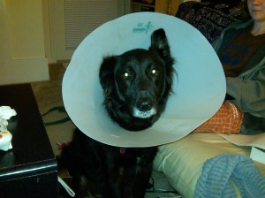 Sad Coneheaded Dog.